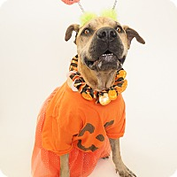 Adopt A Pet :: Berry - Phoenix, AZ