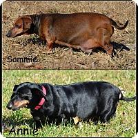Adopt A Pet :: Sammie & Annie-bonded pair - DuQuoin, IL
