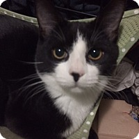 Adopt A Pet :: .Tuxedo - Baltimore, MD