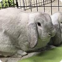Adopt A Pet :: Donny - Woburn, MA