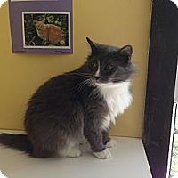 Adopt A Pet :: Smokey - Lancaster, MA