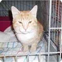 Adopt A Pet :: Harry - Hamburg, NY