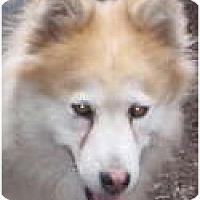 Adopt A Pet :: Sula - Kettle Falls, WA