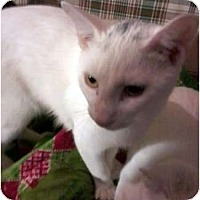 Adopt A Pet :: Phoenix - Jacksonville, FL