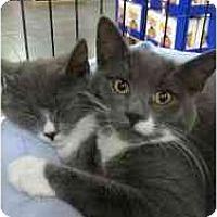 Adopt A Pet :: Linus - Manalapan, NJ