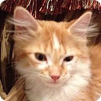Adopt A Pet :: PACO - Hamilton, NJ