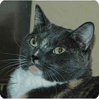 Adopt A Pet :: Pearl - Warminster, PA