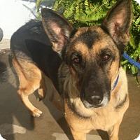 Adopt A Pet :: Ro - Redondo Beach, CA