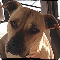 Adopt A Pet :: Ginger - Johnson City, TX