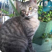 Adopt A Pet :: Hazel - Huntley, IL