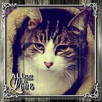 Adopt A Pet :: Jonas - New City, NY