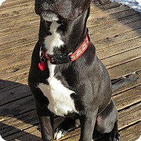 Adopt A Pet :: Jake Arrieta- ADOPTION PENDING - Wood Dale, IL