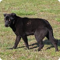 Adopt A Pet :: Black Jack - Harmony, Glocester, RI