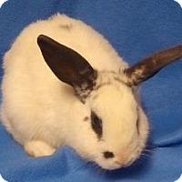 Adopt A Pet :: Harley - Woburn, MA