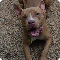 Adopt A Pet :: LOTTO - Decatur, GA