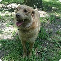 Adopt A Pet :: Rider - Capon Bridge, WV