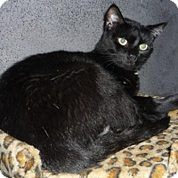 Adopt A Pet :: Blackie - Dallas, TX