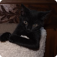 Adopt A Pet :: Kittles - Salem, OR