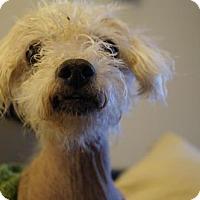 Adopt A Pet :: Rossi - St Paul, MN