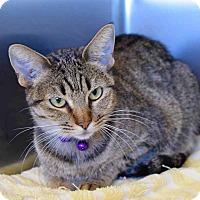 Adopt A Pet :: Purhomey - Sierra Vista, AZ
