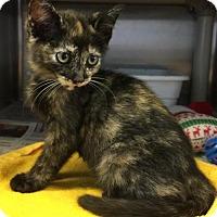 Adopt A Pet :: Abigail-Shelter - Rustburg, VA