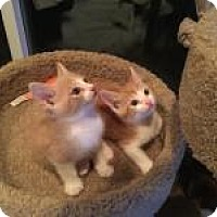Adopt A Pet :: Marvel and Chumley - Mission Viejo, CA