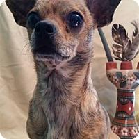 Adopt A Pet :: Tigress - Shreveport, LA