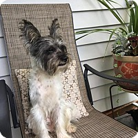 Adopt A Pet :: Tito - Pomfret, CT