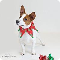 Adopt A Pet :: Hart - Naperville, IL