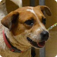 Adopt A Pet :: Bitzy - Southbury, CT