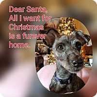 Adopt A Pet :: Giana - Millersville, MD