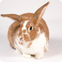 Other/Unknown for adoption in Kingston, Ontario - Winnie