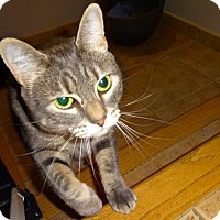 Adopt A Pet :: Salem - Vancouver, BC