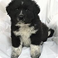 Adopt A Pet :: Waldo - Mooresville, NC