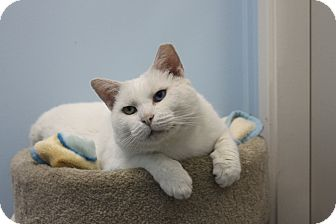 Domestic Shorthair Cat for adoption in North Branford, Connecticut - Sluggy