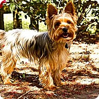 Adopt A Pet :: Samson - Baton Rouge, LA