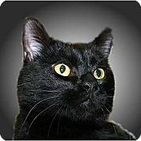 Adopt A Pet :: Ryan - Montgomery, IL