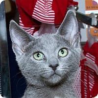 Adopt A Pet :: Jasper B - Sacramento, CA