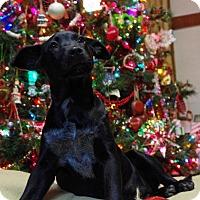 Adopt A Pet :: Jingle - Staunton, VA