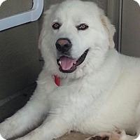 Adopt A Pet :: Ranger Adopted - Tulsa, OK