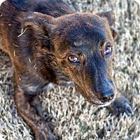 Adopt A Pet :: Crumpet - Huntsville, AL