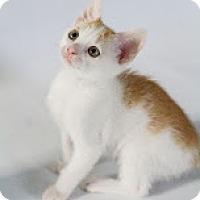 Adopt A Pet :: Rio - Pembroke Pines, FL