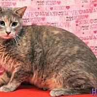 Domestic Mediumhair Cat for adoption in Sebastian, Florida - Delilah
