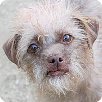 Adopt A Pet :: Smokey - Las Vegas, NV