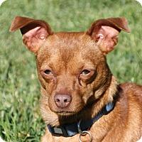 Adopt A Pet :: Wade - Edmonton, AB