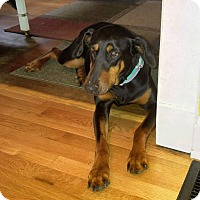 Adopt A Pet :: Nikko - New Richmond, OH