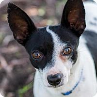Adopt A Pet :: Andy* - Miami, FL