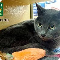 Adopt A Pet :: Bagheera - Oakville, ON