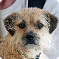Terrier (Unknown Type, Small) Mix Dog for adoption in Palmdale, California - Fergus
