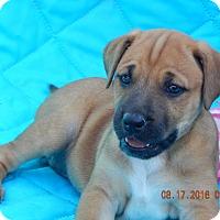 Adopt A Pet :: Kuma (7 lb) Video! - SUSSEX, NJ